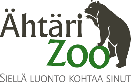 Viikon kesälömakohde: Ähtäri Zoo – toimitusjohtaja Juhani Haapaniemi kertoo pandojen matkasta Suomeen